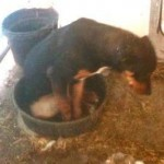 Help get dogs like this out of their buckets